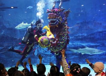 壁纸 海底 海底世界 海洋馆 水族馆 游戏截图 360_260