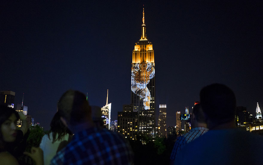 纽约帝国大厦上演濒危动物灯光秀