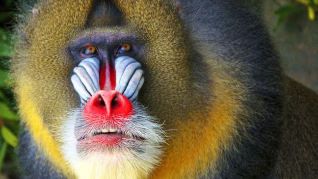 许多哺乳动物,比如狗,不能区分红色和绿色.