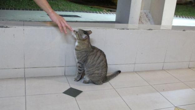 新加坡的猫卫士