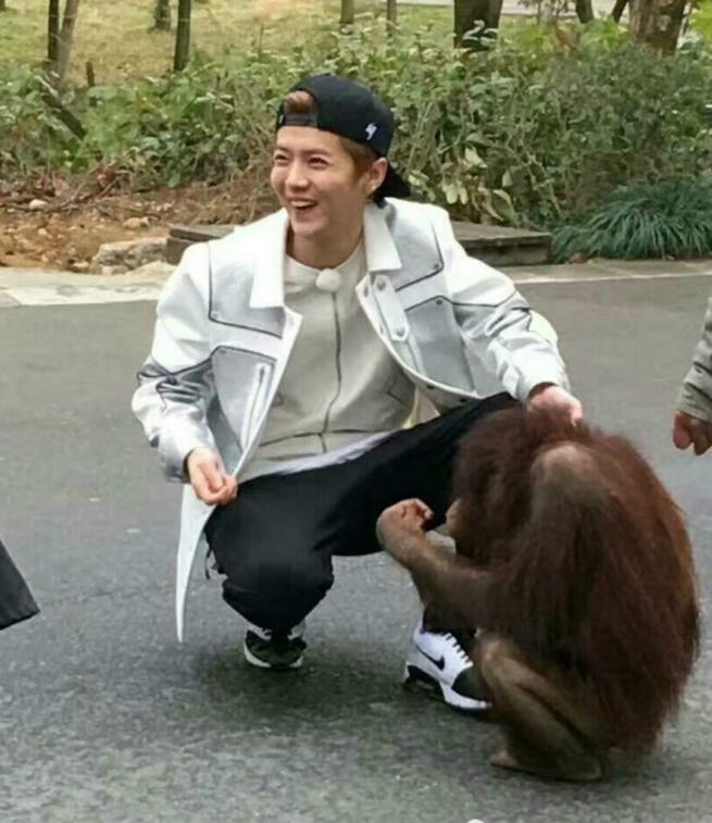 鹿晗在动物园交了新朋友