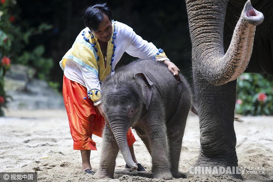"""亚洲情色动物与人_世界地球日盘点人与动物的""""亲密""""瞬间"""