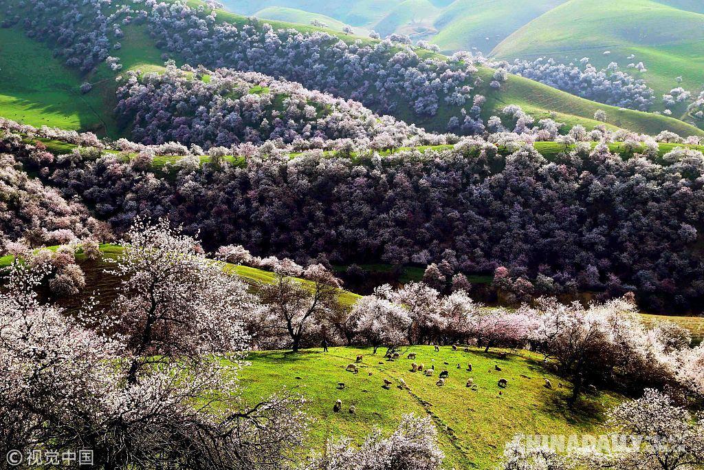 遍寻最美四月天:国内高原景区春游赏花
