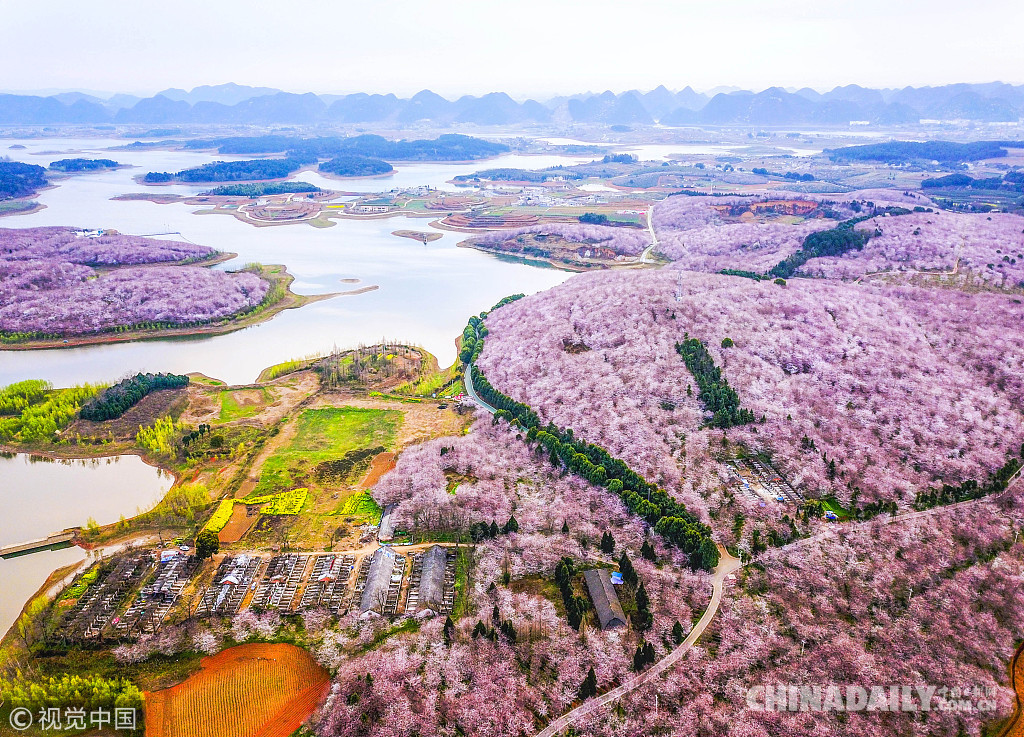 贵州平坝万亩樱花园